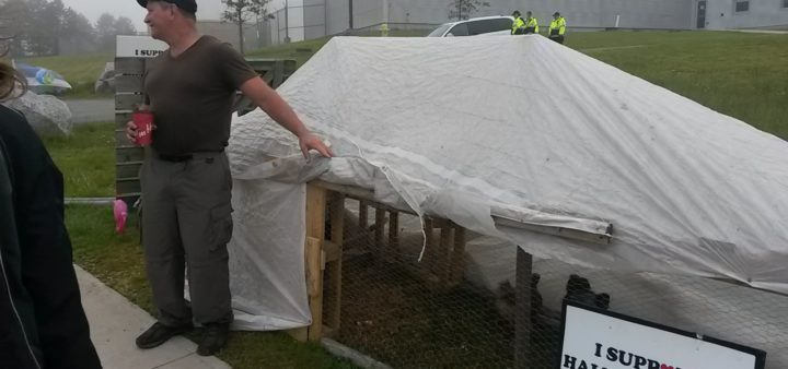 Halifax water workers' picket lines now featuring chickens!