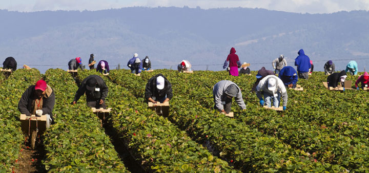 Predicting the future of migrant labour programs…in the 60s and 70s